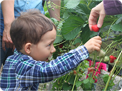 Boy's festival 子供の日、Strawberry picking いちご狩り